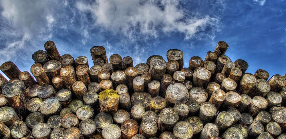 How to season your firewood