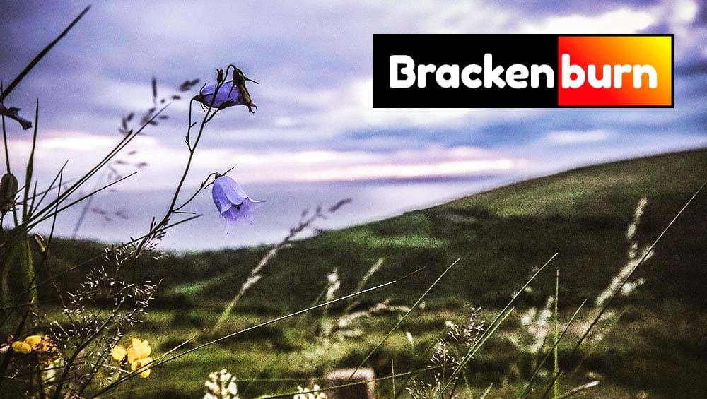 brackernburn brackets, made from bracken, are a great wood fuel alternative