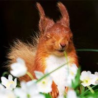 Red Squirrels of Northern England Unite